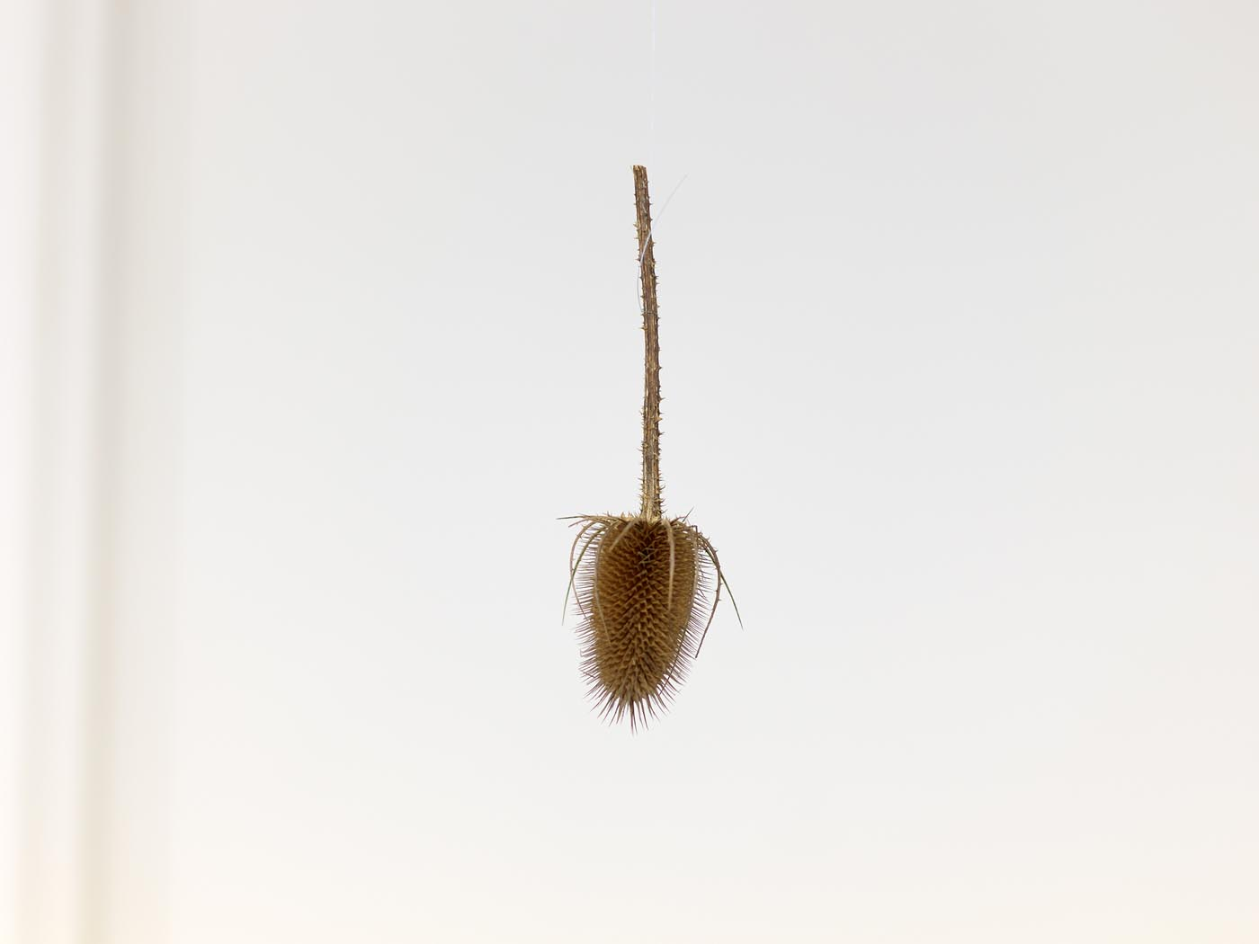<p><em>Sit</em>, 2019, teasel to discourage sitting on exhibited chairs, origin and courtesy Sir John Soane's Museum, London<br />Photo: Simon Vogel, Cologne</p>